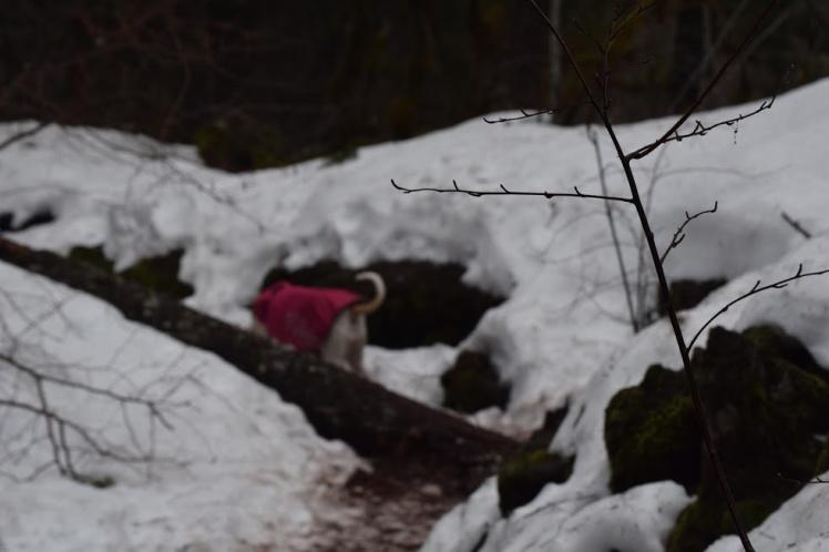 trail21
