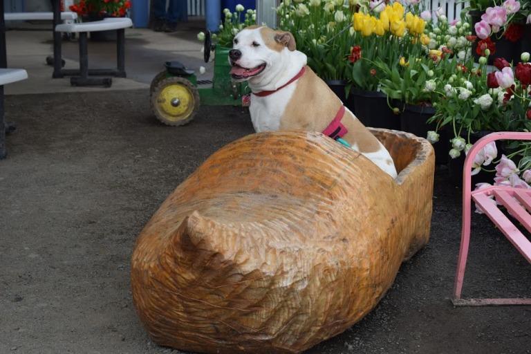 woodenshoe1