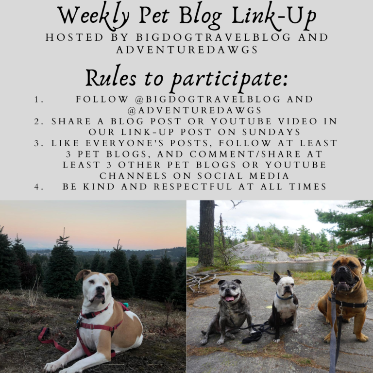 Weekly Pet Blog Link-up